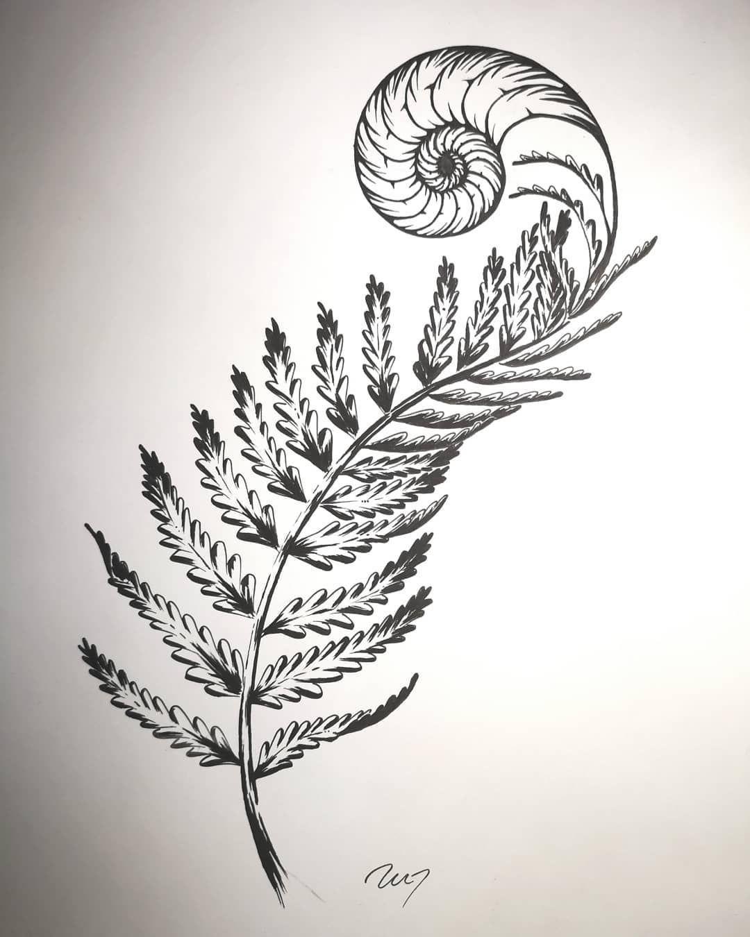 Photo of SYMTRI TATTOO sur Instagram: «» Les spirales dans la nature ont tendance à suivre le Golden Rati …