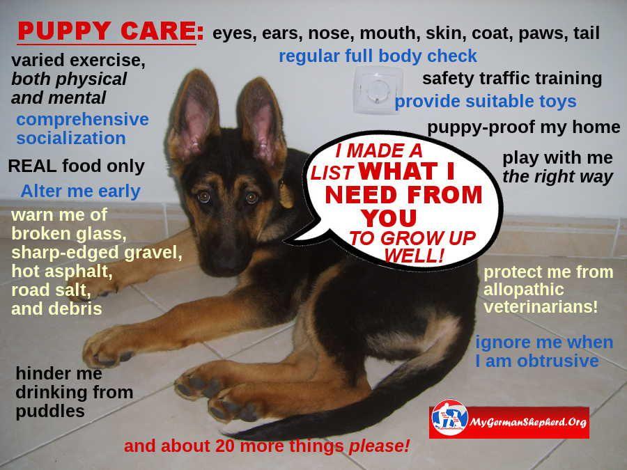 Puppy Care List Puppy Care New Puppy Puppy Care List