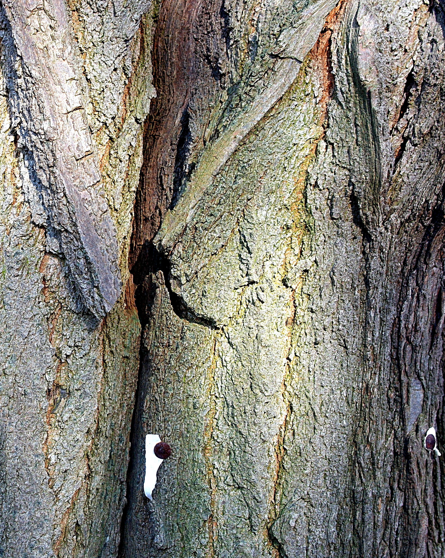 Tree Bark And Nail