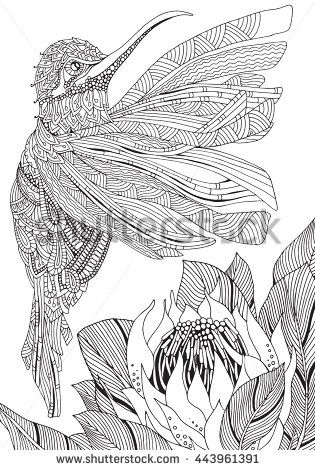 Coloring Book Page For Adult And Children Black White Pattern Monochrome Background South Africa