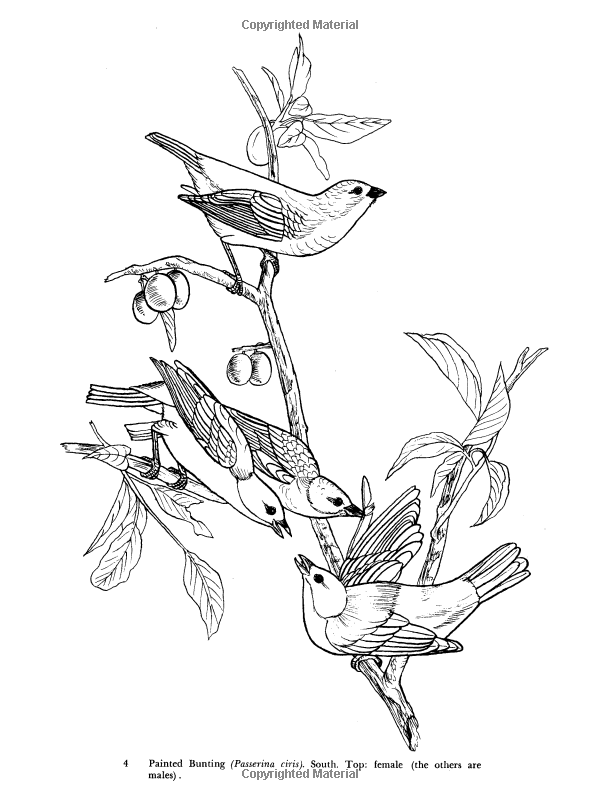 Audubon 39 s Birds of America Coloring Book John James