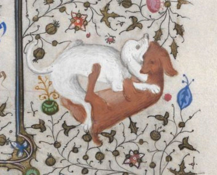 Image result for medieval manuscript puppies
