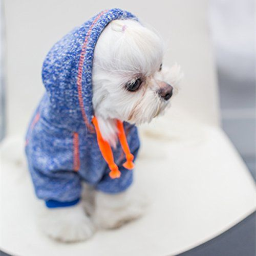 7ce30357 Want to know how to make DIY dog clothes? If your furry pup needs a  makeover, these dog outfit ideas may just be the thing you need! Make them  look cute!