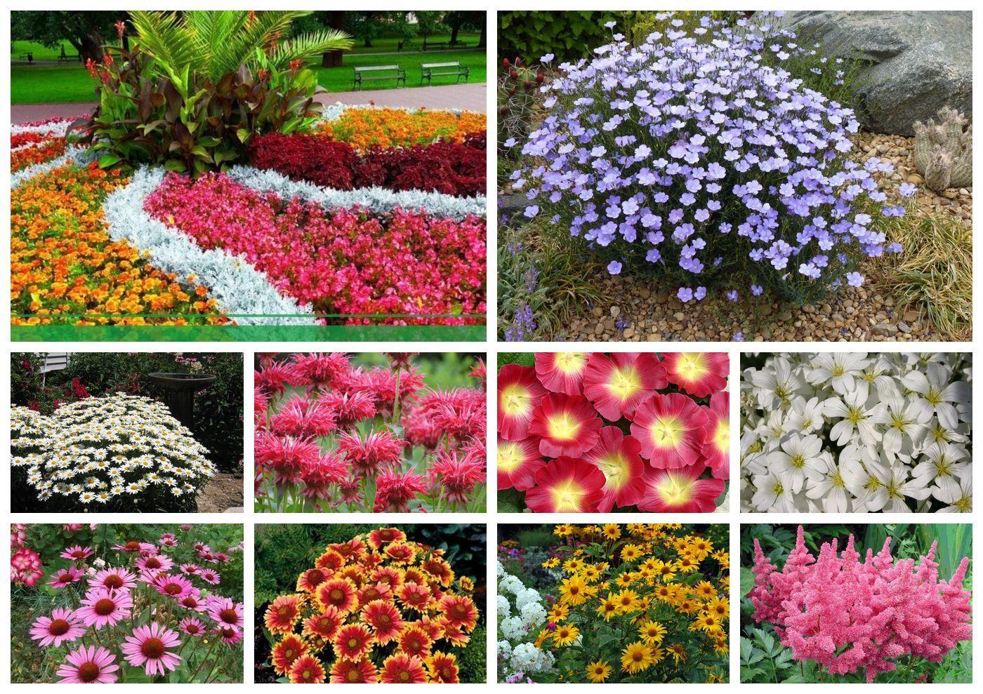 Цветы которые цветут все лето картинки и названия