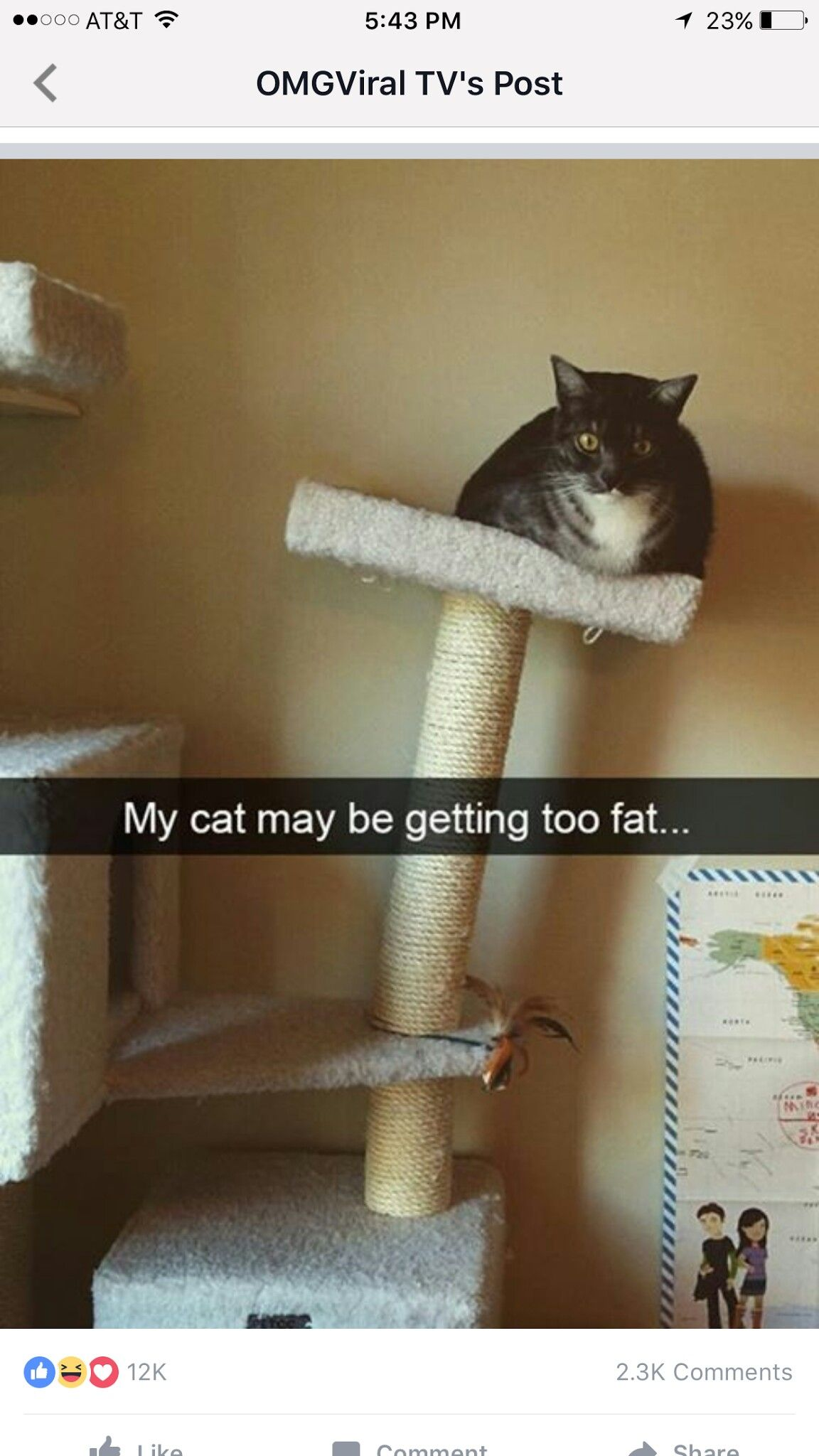 Pin By Nat Vr On Lmao Cats Cute Animals With Funny Captions Cat Quotes Funny