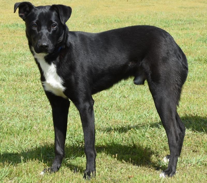 Adopt Benton On Dog Adoption Homeless Pets Poodle Dog