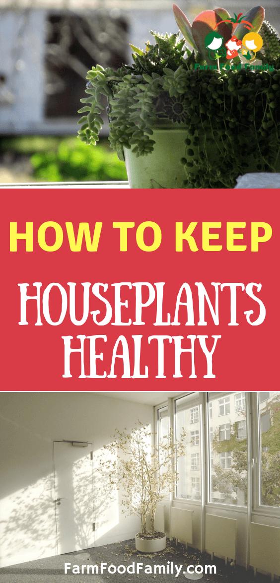 14 plants House healthy ideas