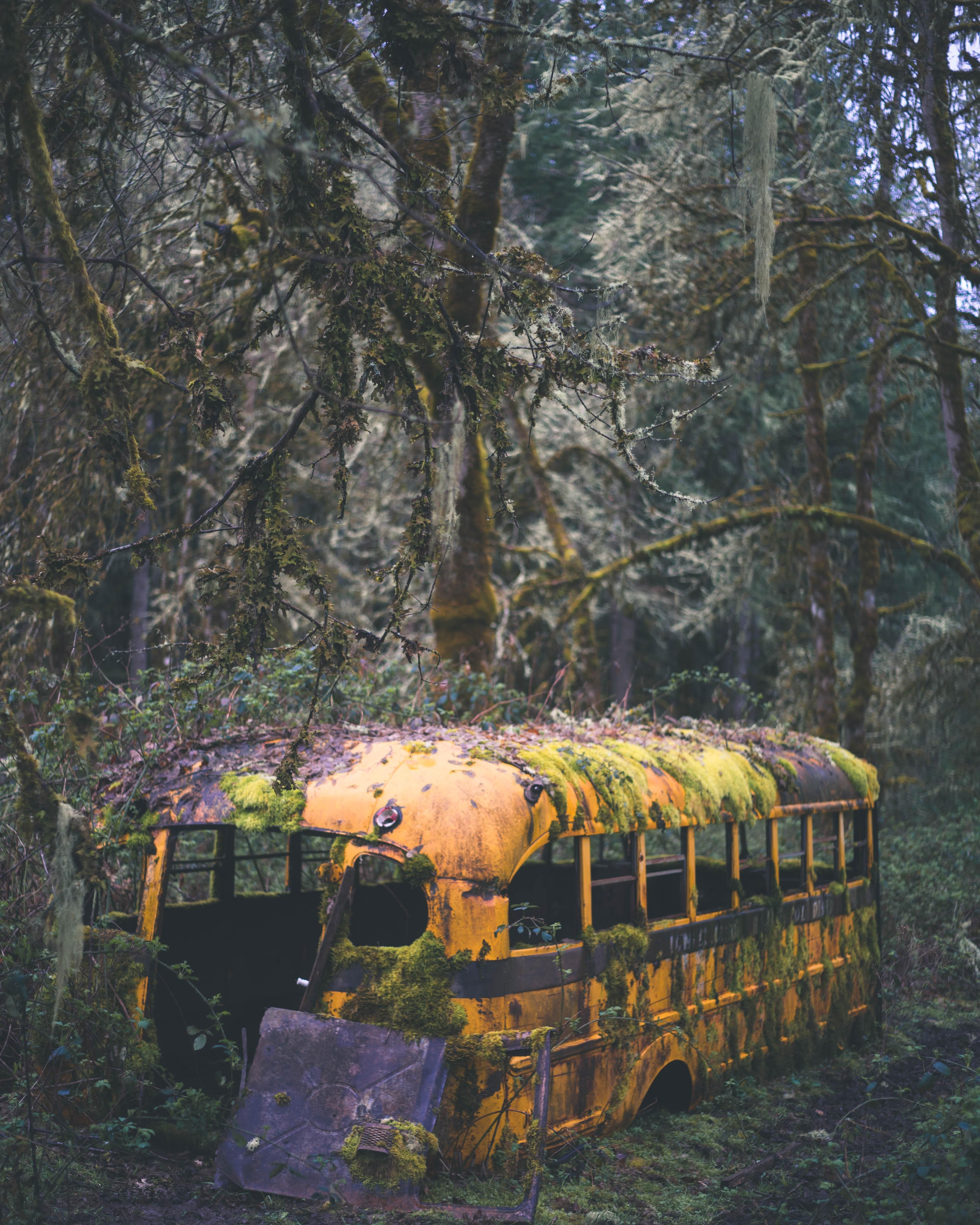 Abandonded Bus In Eugene OR [4000x5000] Insta: Tyler__ward