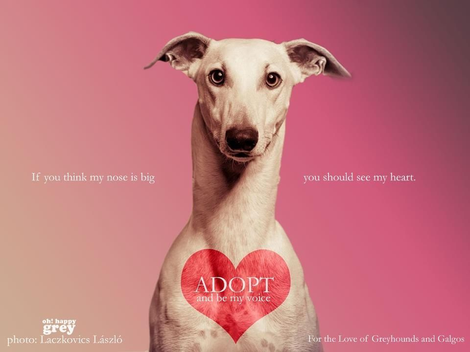 3 If You Can T Adopt Just Be Their Voice 3 By Oh Happy Grey