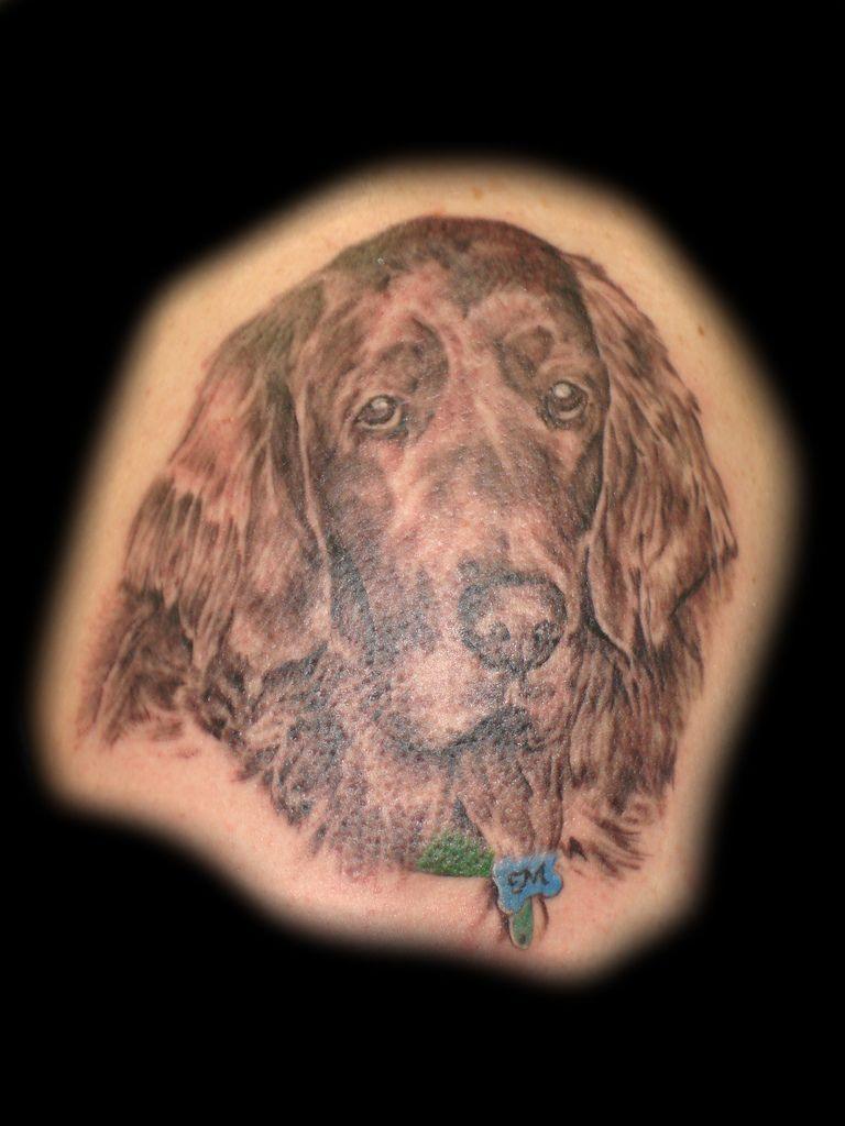 Irish setter tattoo
