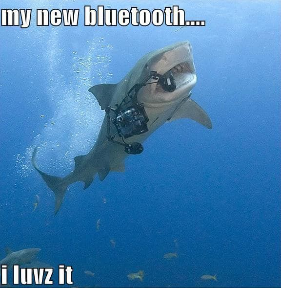 The 25 Funniest Shark Memes Sharks Funny Funny Animal Memes Cute Animal Memes