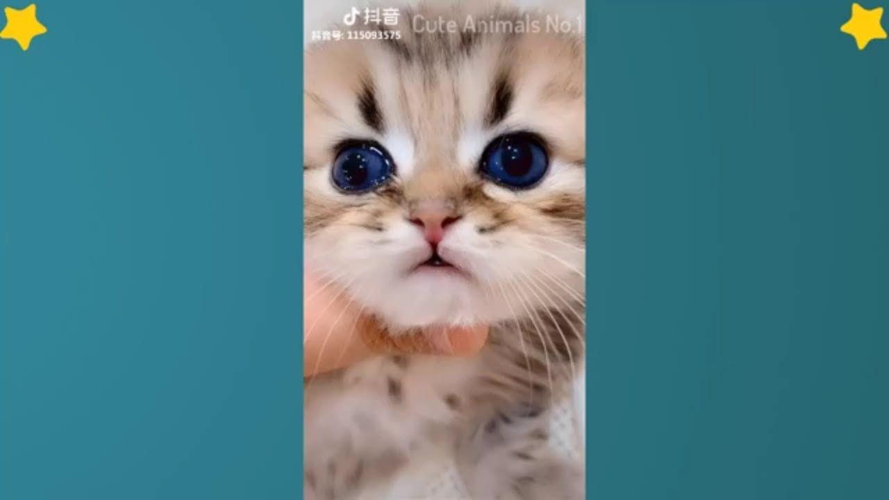 Tiktok Cat Tik Tok Funny Cat Cute Cat Videos Compilation 2019 Ador Cutecat Funnycat Adorablecat Kittens Cute Cat Gif Cat Gif Funny Cat Jokes
