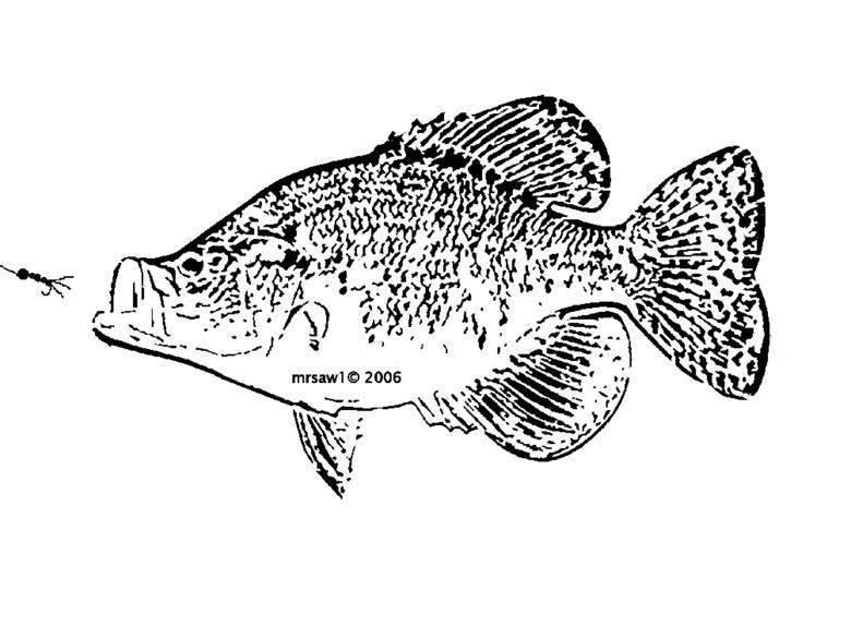 Printable Scroll Patterns Crappie Fish Fish Art Crappie
