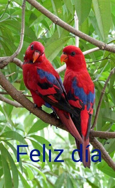 Buenos Dias Animals Parrot Bird