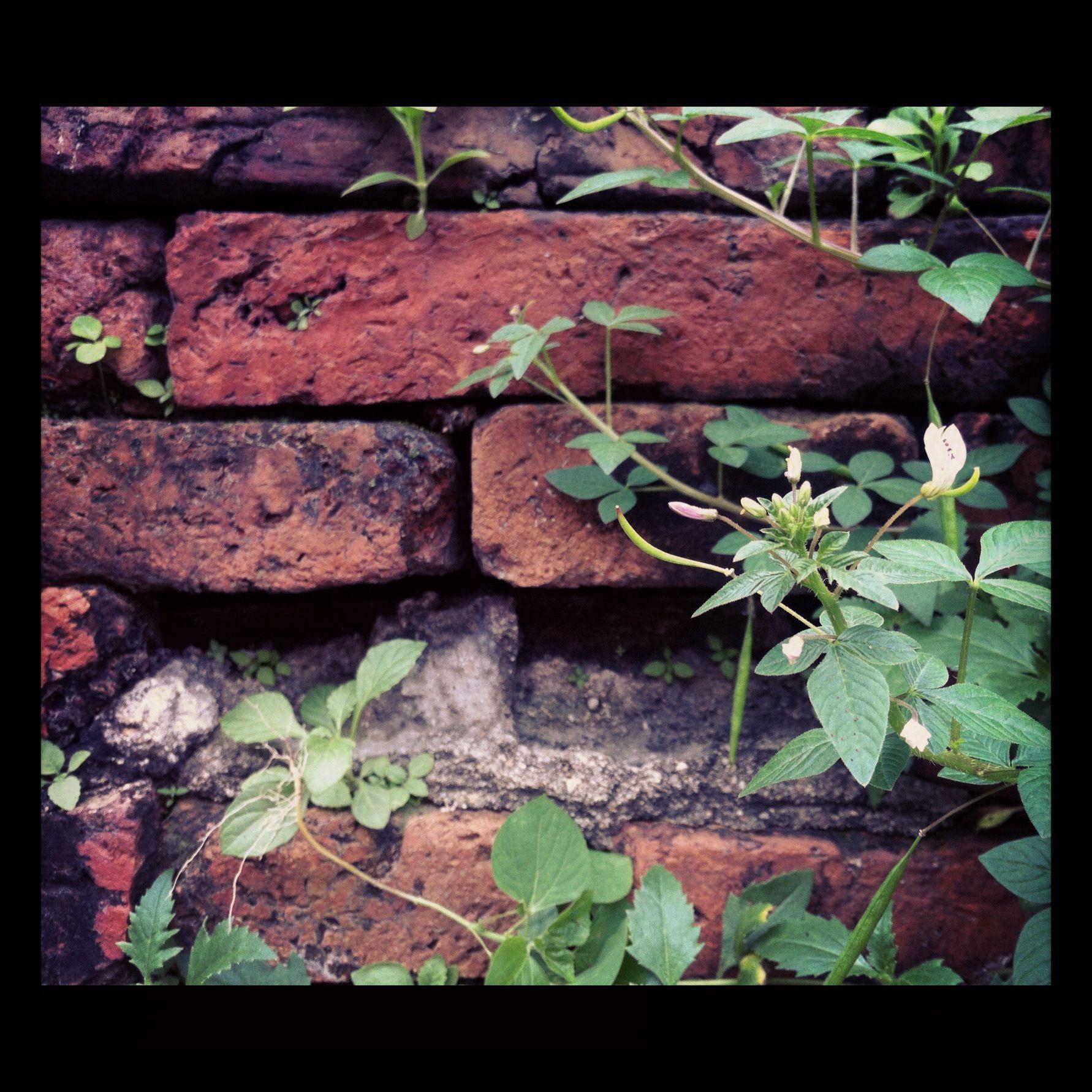 Wallflower.