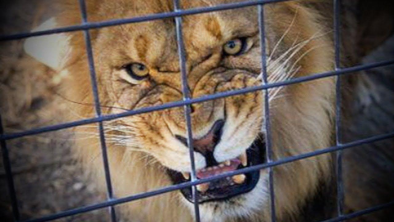 11+ Muskingum county animal shelter ideas
