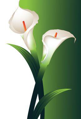 Calla Lily Retro Background Flower Wallpaper Calla Lily
