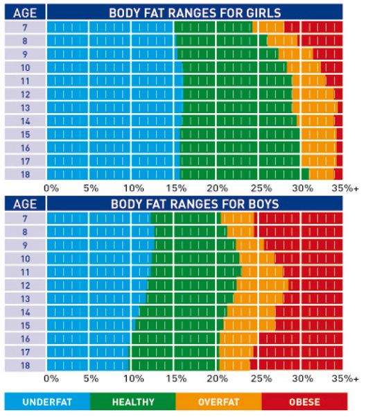 body fat percentage infographic