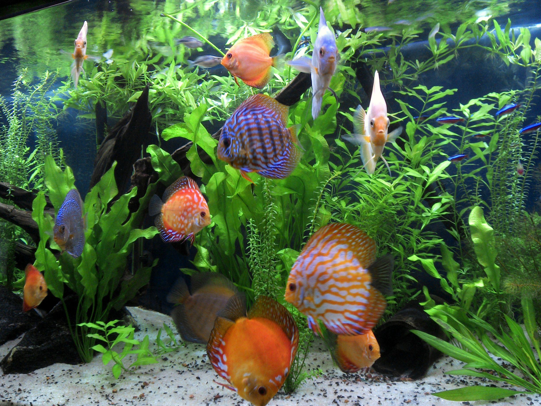cbe36c2cf7b9d72ec3f8983d5e86ccbb Incroyable De Aquarium Deco Des Idées