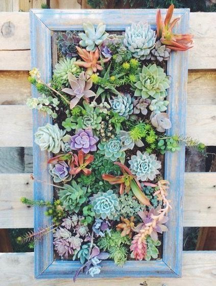Small Space Garden Ideas hanging succulent. hanging garden. small space garden. small