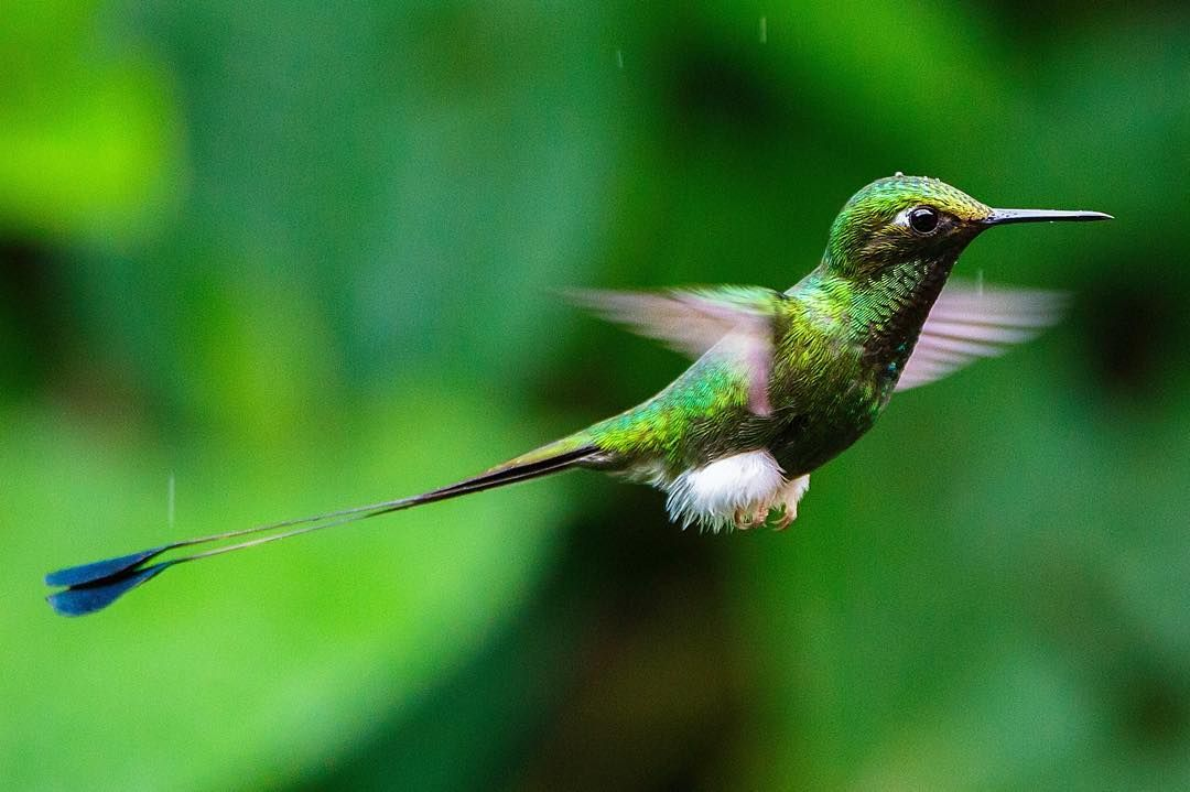 The name hummingbird is derived from the characteristic