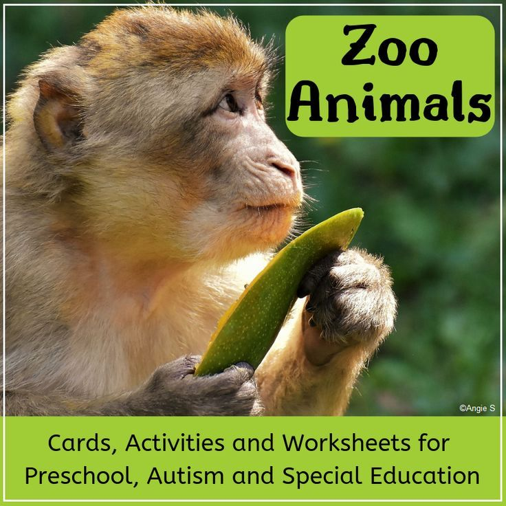 Zoo Animals Bundle including Activities, Worksheets and