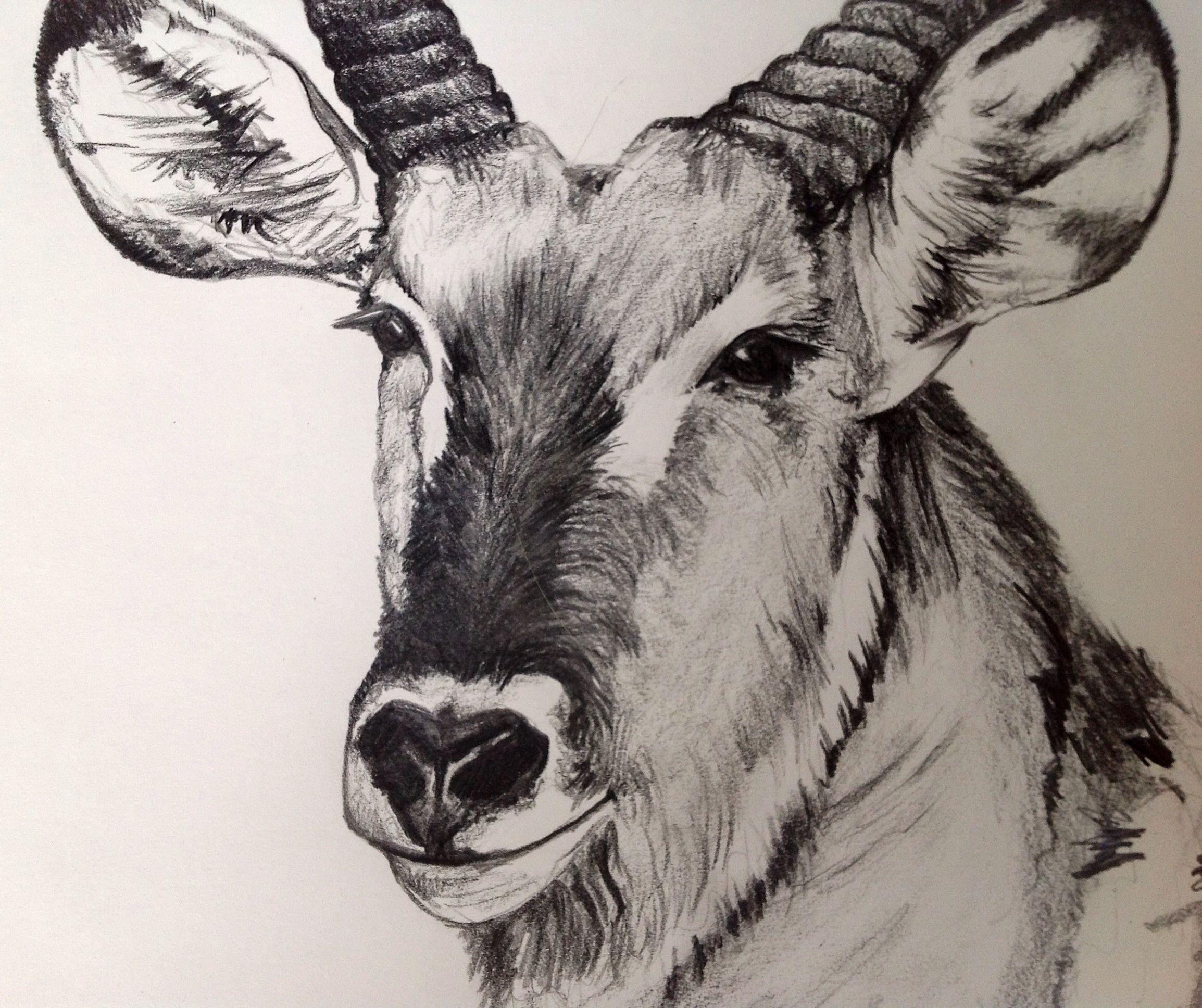 Bush buck pet birds dressmaking my drawings moose art draw needlework
