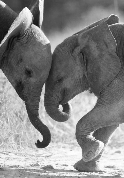 How cute is this! Elephants
