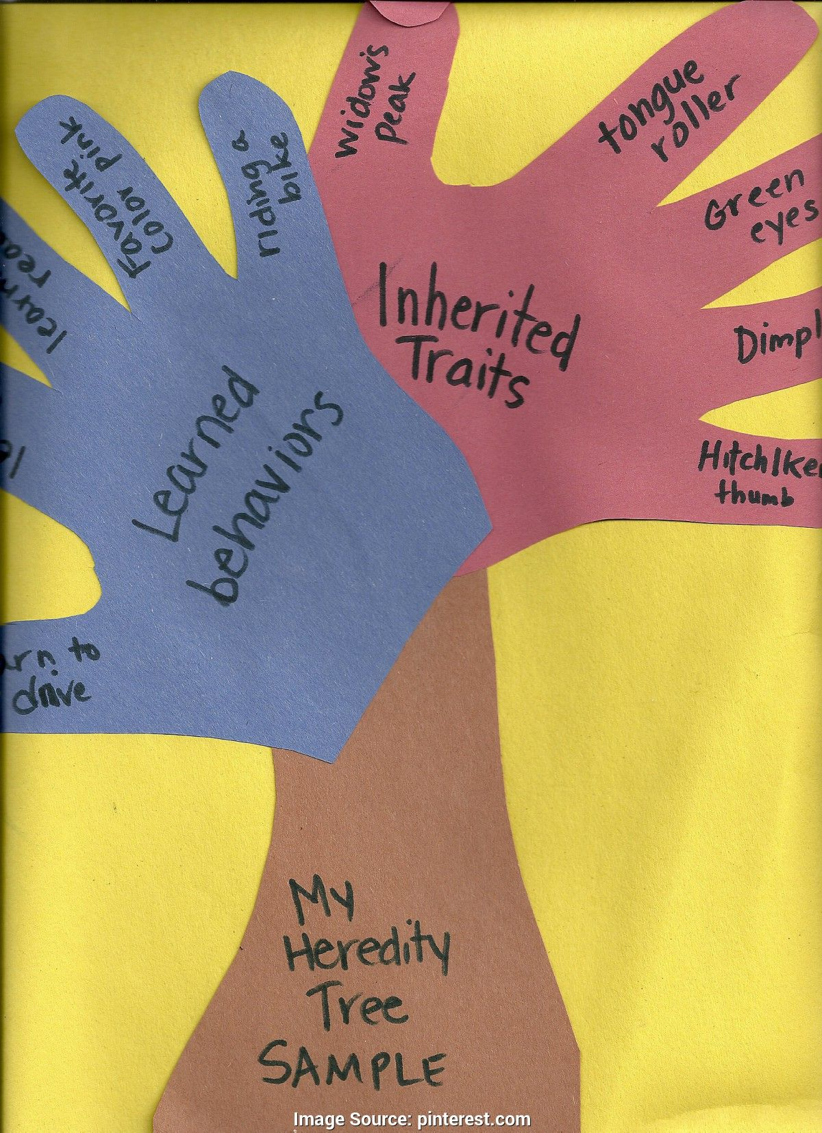 Top 1st Grade Lesson Plan On Heredity Heredity Tree