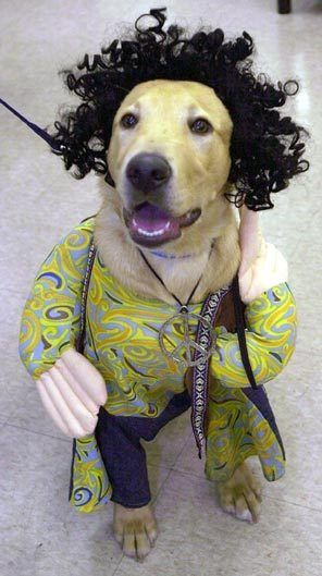 Dogs In Halloween Costumes Dog Halloween Costumes Hippie Hair