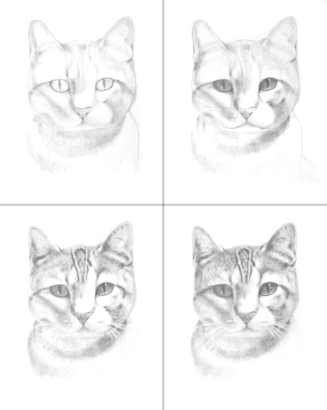 How To Draw A Cat Portrait Animal Drawings Cats Art Drawing Cat Drawing Tutorial