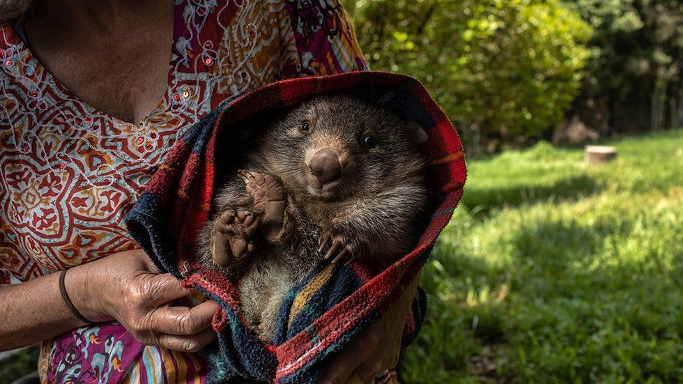 The Animals that Survived Australia's Fires (PHOTOS) The