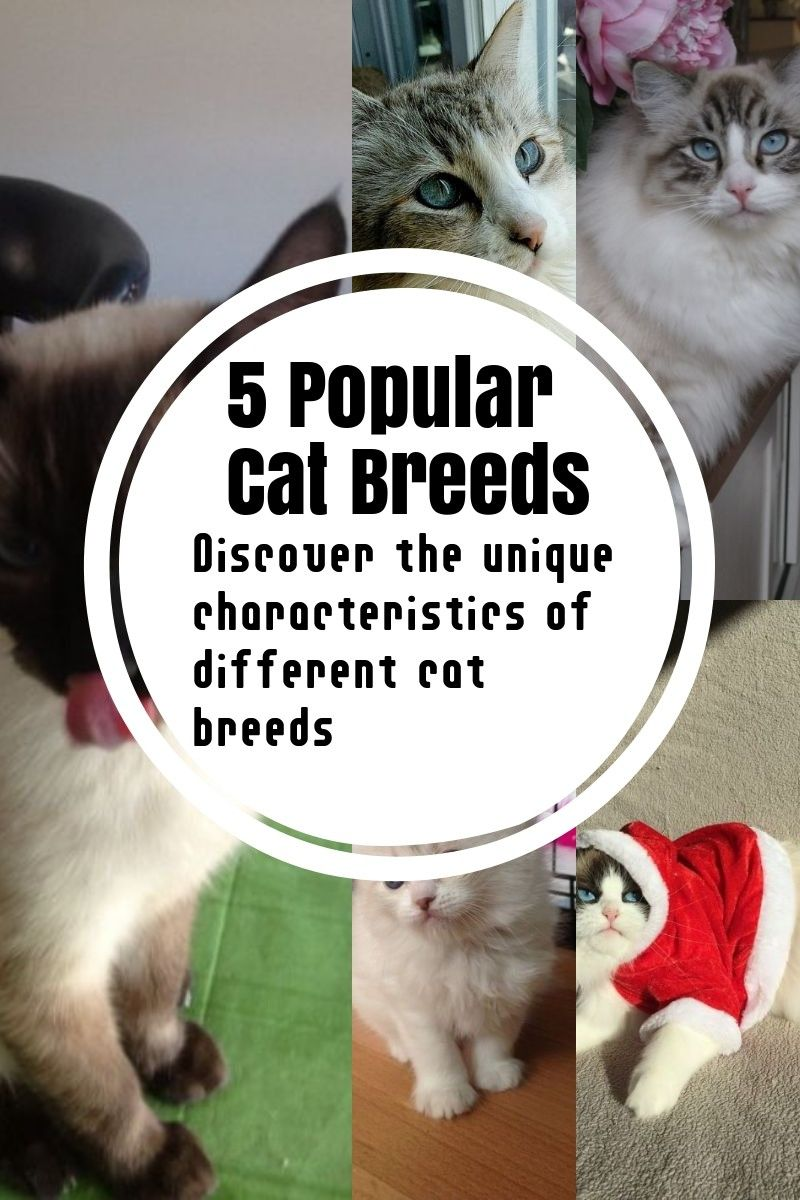 The Most Common Cat Breeds Cat Breeds Common Cat Breeds