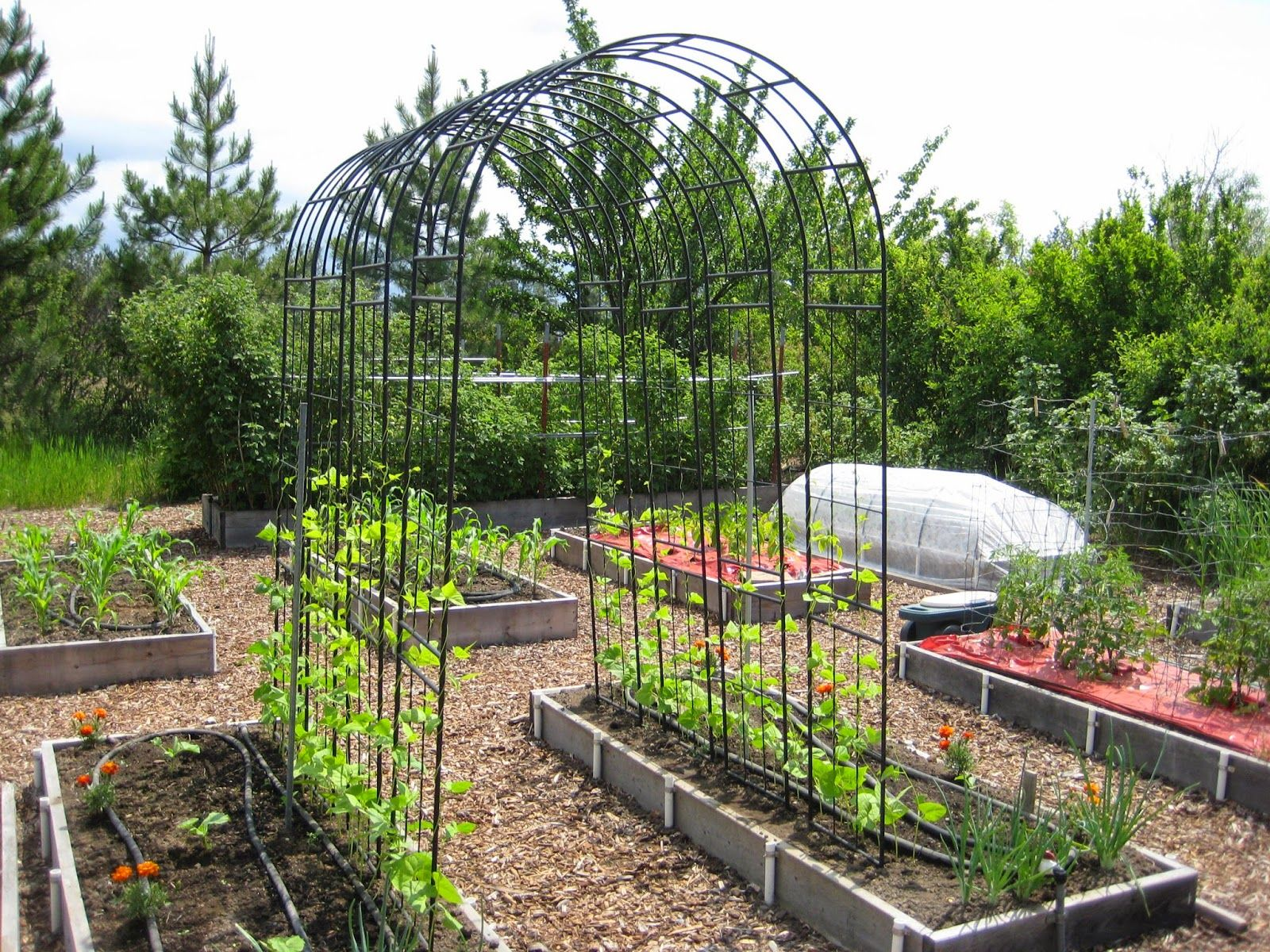 Beautiful Pole Bean Trellis Ideas Part - 13: Susanu0027s In The Garden: Pole Bean Trellis Idea - Black Steel Arbors