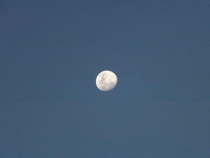 Luna. Espiando.