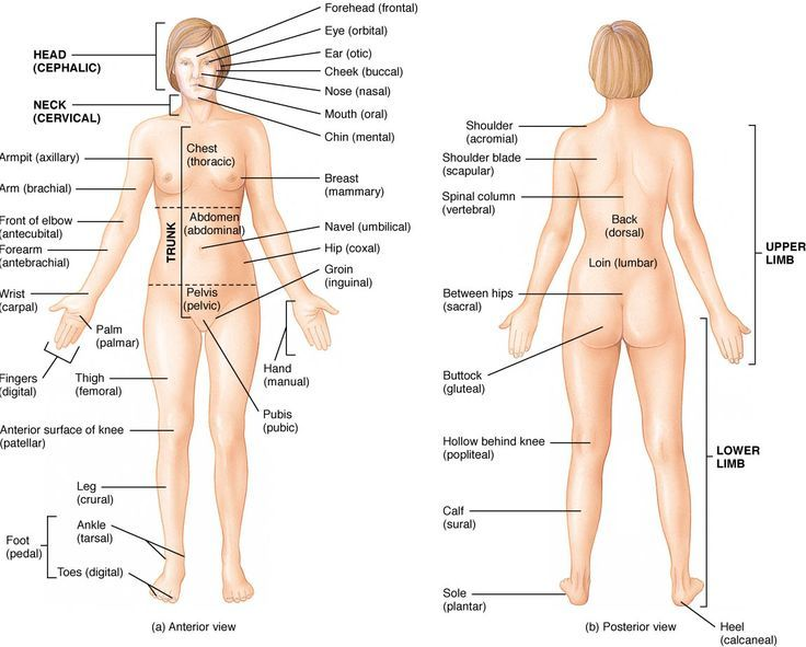 anatomical divisions of the body - Google Search | Anatomy ...