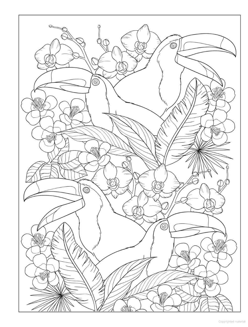 Creative Haven Truly Tropical Coloring Book Coloring Books Tropical Coloring Pages