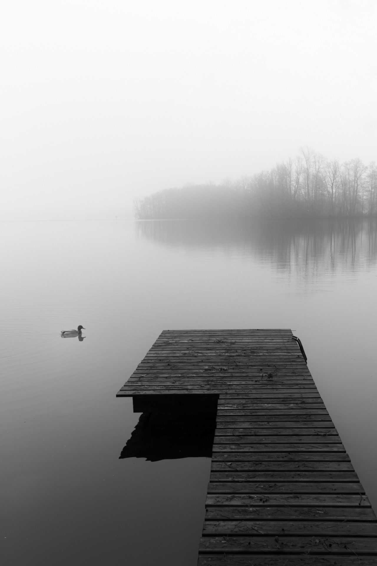 Tranquility - #bad #edited #fog #friday #landscape #meolog #on #photographers #saarow #scharmützelsee #seriously #source: #tumblr