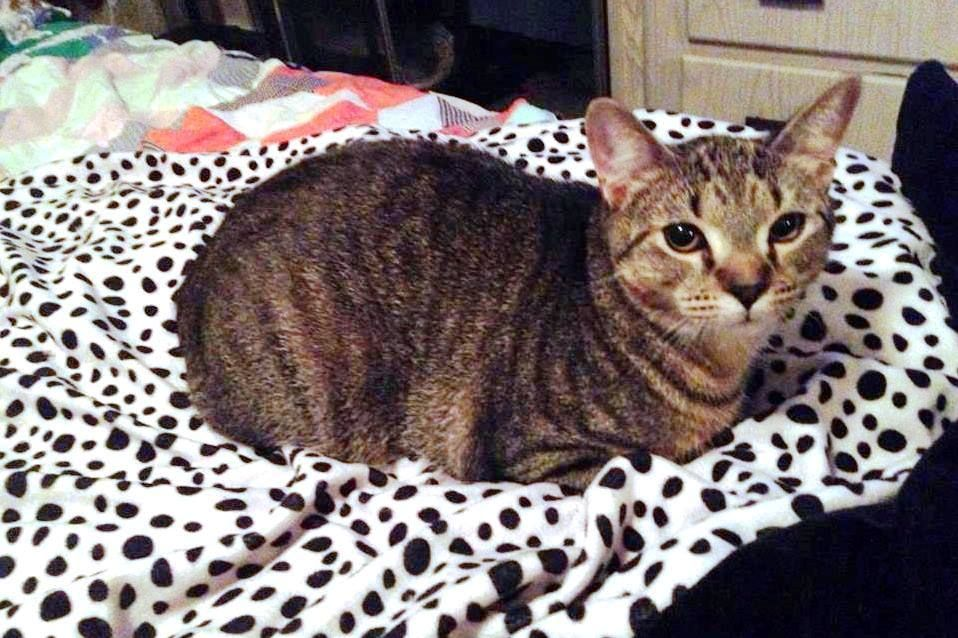 Meet foster cats Smasher, a male brown tabby & Pinky a