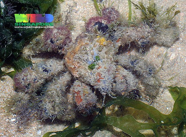 """https://flic.kr/p/5437Ur 