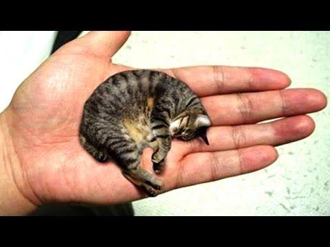 Photo of 10 Kleinste Tiere Der Welt!