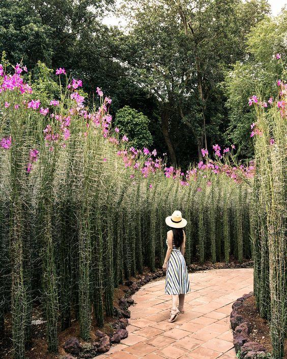 31 Terrassenmuster Mit Gitter Bedeckt Mit Blumen Bedeckt In 2020 Singapur Reise Botanischer Garten Gitter Terrasse