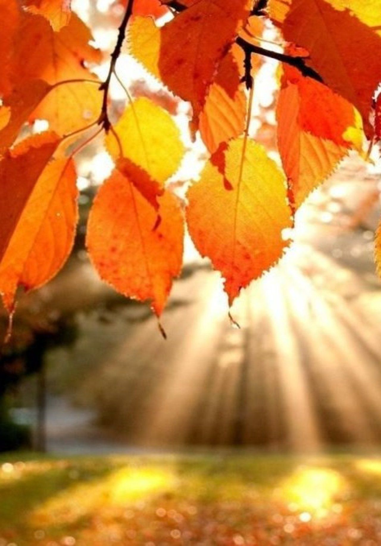 Buy Love in Fall facebook cover picture trends