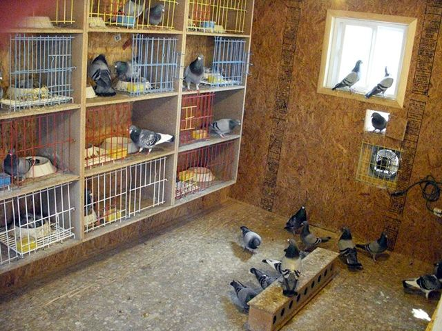 How to Design Pigeon Loft, Make a House or home for pigeon ...