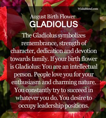 August Birth Flower Gladiolus Symbolic Meaning The Symbolizes A Strong Character And Focus It Also Signifies Remembrance Dedication