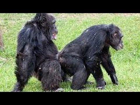 Mating Monkey Documentary | Animals Mating Monkeys ...