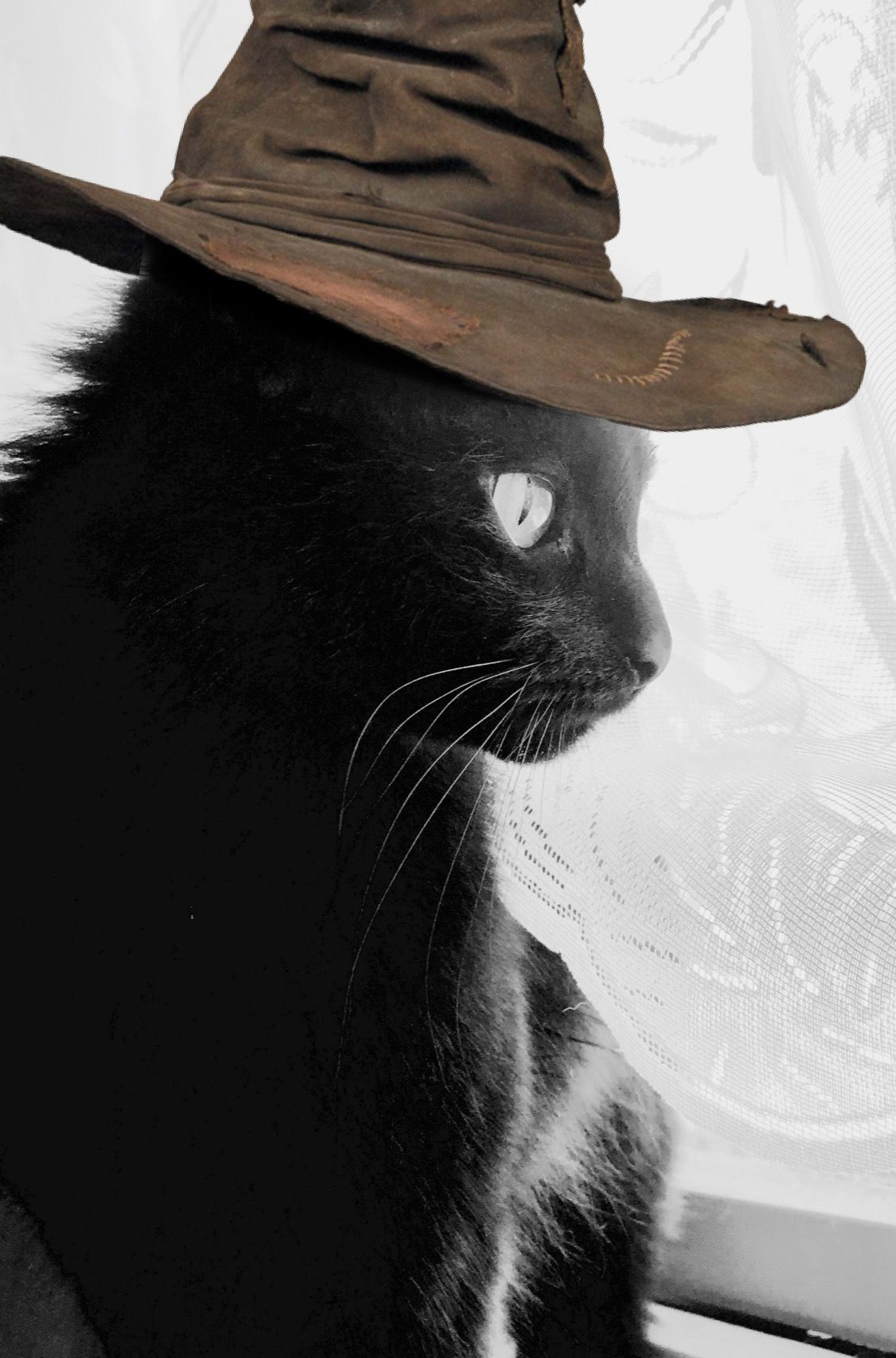 Black cats are lucky 💜 Cowboy hats, Black cat, Cowboy
