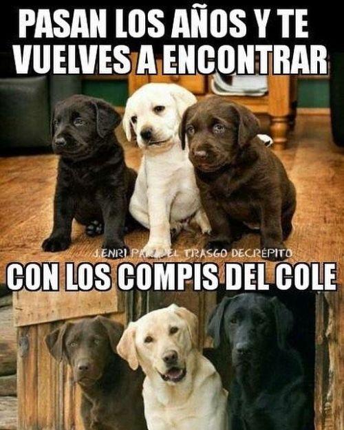 Dogsfunnychihuahua Memes Divertidos Memes Perros Memes De Perros Chistosos