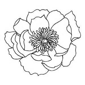 California Poppy Drawing Bing Images Poppy drawing