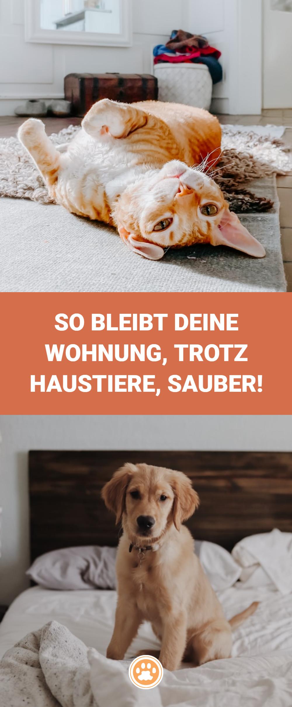 So Sorgst Du Fur Ein Sauberes Zuhause Ohne Deinem Tier Zu Schaden Haustiere Tiere Katzen Hunde Katzenhaare Hundehaar In 2020 Tier Fakten Hundehaltung Haustiere